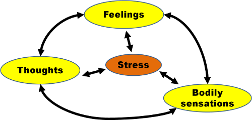 The Vicious Negative Feedback Loop of Stress